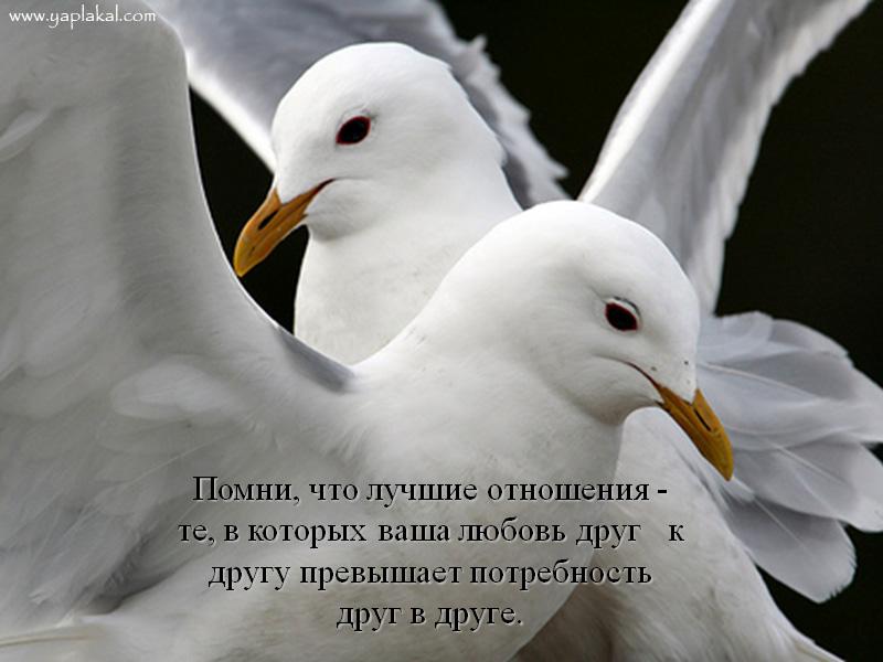 мудрые советы в картинках - блоги В ГОРОДЕ.RU.